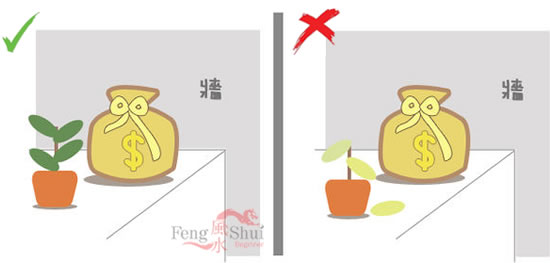 Only live plants are allowed to placed in Wealth position