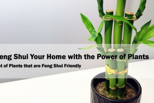 Feng Shui Your Home with the Power of Plants