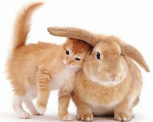 Rabbit replaced by cat