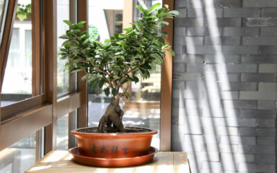Bonsai Feng Shui – Good or Bad?
